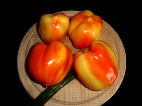 Paprikasamen 10 Ungarischer Pusztagold Paprika  Sämereien Saatgut Paprika