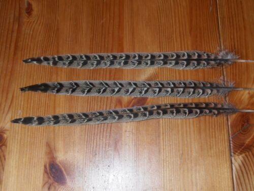"""25 HEN PHEASANT TAIL FEATHERS 12/"""" FLY TYING ART.FLORAL DISPLAY,HAIR,JEWELLERY"""