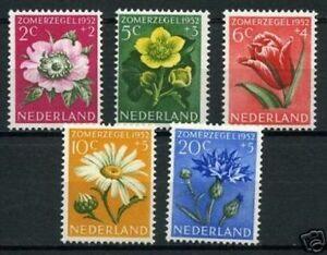 Nederland-583-587-zomerzegels-bloemen-flowers-1952-luxe-postfris-mnh