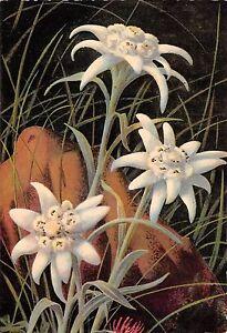 BR30032-La-Flore-de-Montagne-edelweiss-fleurs-flowers