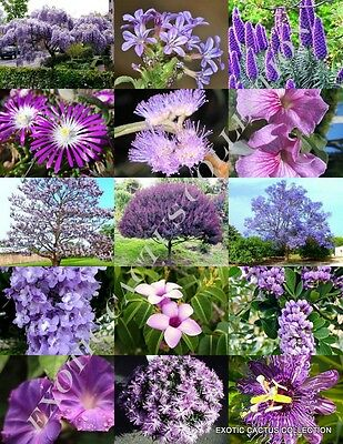 COLOR TREE MIX rare flower plant flowering fragrant bonsai trees seed 100 seeds
