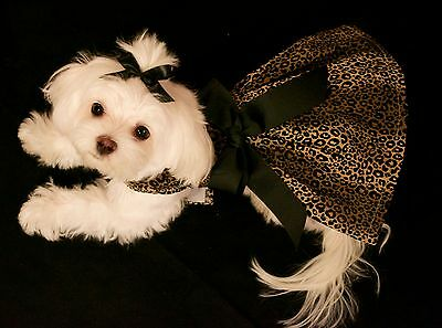 Small - My Leopard  Dress - Dog dress clothes-Puppy Apparel -TOY