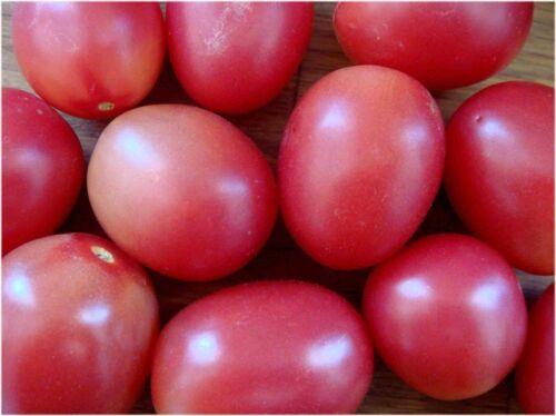 graines de tomate thaï Pink vendu en sachet de 60 graines culture en procédé bio