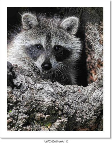 Baby Raccoon In Tree Art Print Home Decor Wall Art Poster