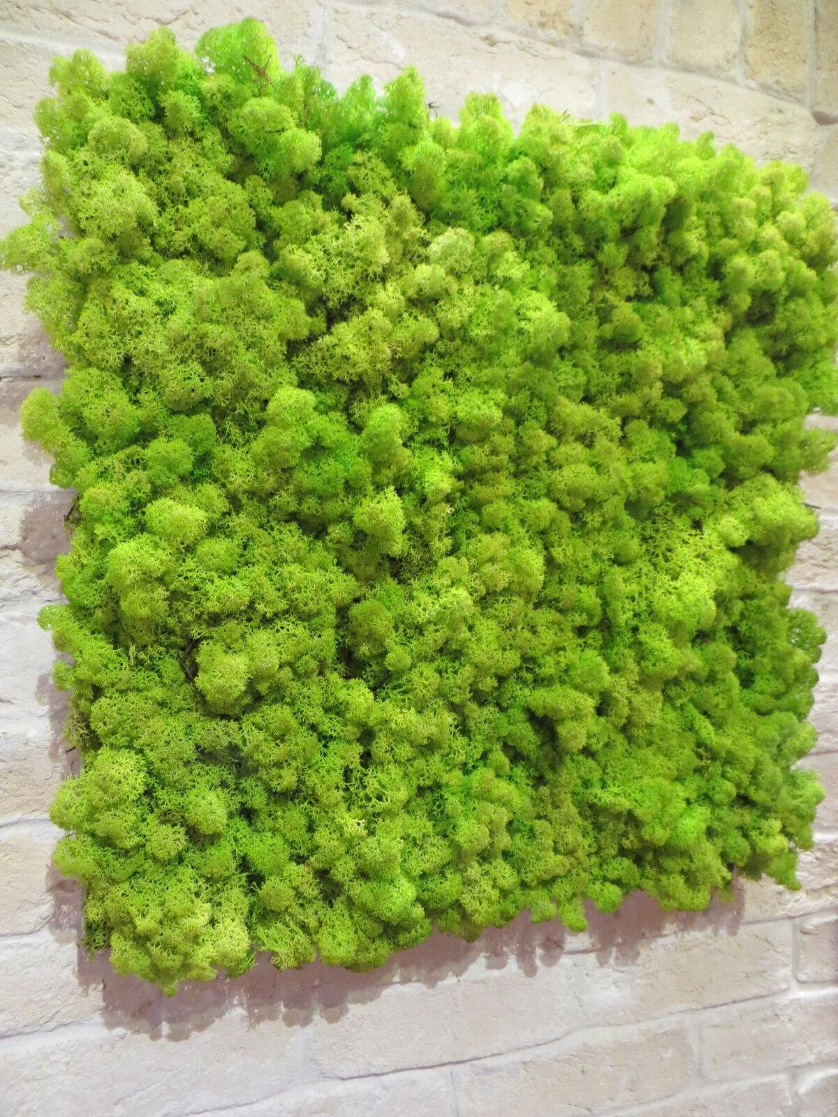 Wandbild - Moosbild - Wanddekoration - Islandmoos   Rentiermoos - Frühlingsgrün