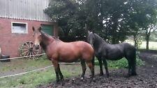 Kräuter - Wurmkur für Pferde (bewährte Mischung)