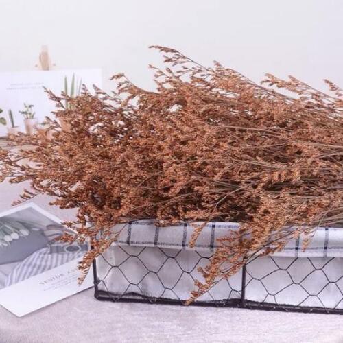 Orange Natural Dried Valentine Grass Flower Stem Bunch