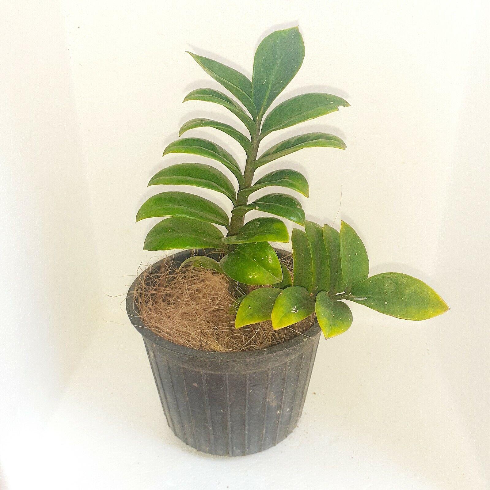 Natural Coconut Husk Coir Hydroponics Fiber Pure Organic Orchids Flowers Plants