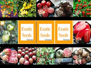 Tomaten-Set-Tomatenset-15-verschiedene-Sorten-je-10-Samen