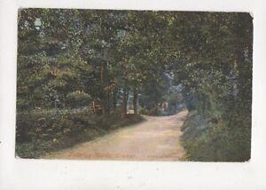 Felbrigg Woods Cromer 1905 Postcard 885a - Aberystwyth, United Kingdom - Felbrigg Woods Cromer 1905 Postcard 885a - Aberystwyth, United Kingdom