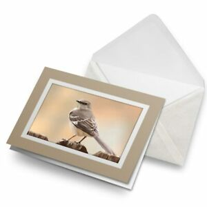 Greetings-Card-Biege-Northern-Mockingbird-Bird-Birds-3476