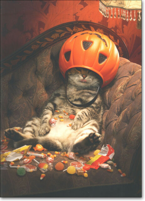 Cat Under Candy Bucket Funny Halloween Card - Greeting Card by Avanti Press