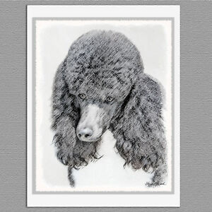 Details about 6 Standard Poodle Parti Black and White Dog Blank Art Note  Greeting Cards