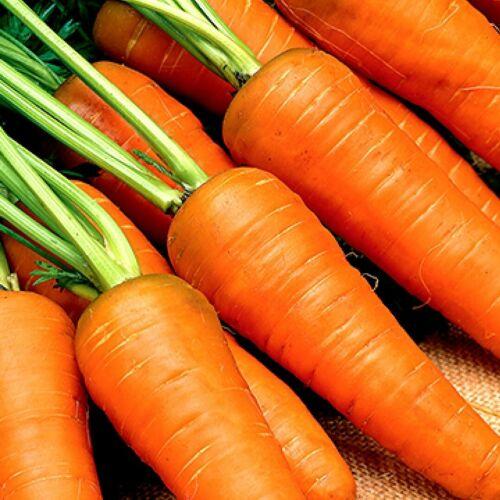 Carrot RED KURODA 100 Seeds vegetable garden HEIRLOOM non-gmo OPEN POLLINATED