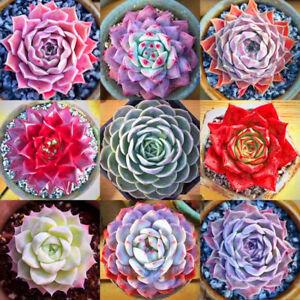 400pcs-Mixed-Home-Plant-Succulent-Seeds-Succulents-Living-Stones-Plants-Cactus