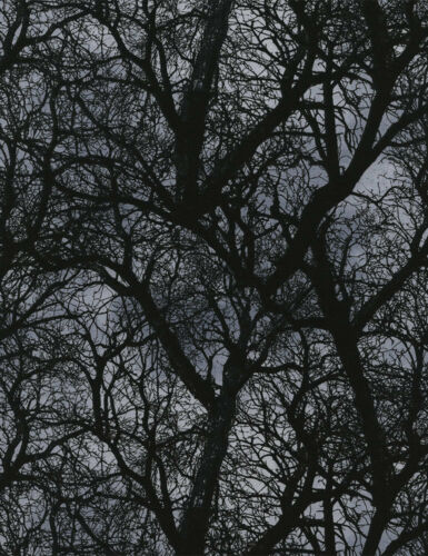 Fat Quarter Wicked Trees at Dusk 100/% Cotton Quilting Fabric Black Grey C3760