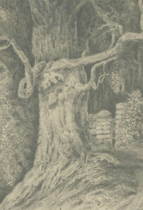 Mid-19th-Century-Graphite-Drawing-Study-of-a-Knarly-Tree