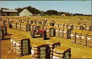 ttw-Postcard-Bales-of-Cotton