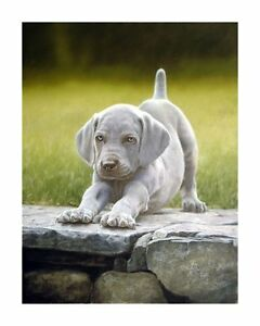 John-Silver-EARLY-MORNING-EXERCISE-Weimaraners-Weimar-Gun-Dog-Cute-Pup-Puppy-Art
