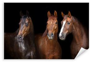 Postereck-3145-Poster-amp-Leinwand-Pferde-Tier-Close-Up-Kopf-Maehne-braun-Herde
