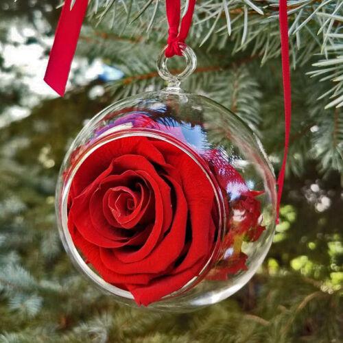 Scarlet White House Rose Garden Ornament