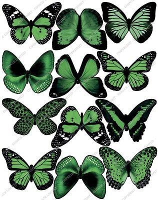 Cakeshop 12 X Pre-tagliati Verde Commestibili Farfalla Decorazioni Per Torta- Per Vincere Una Grande Ammirazione