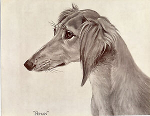 SALUKI IMAGES OF NAMED DOGS OLD ORIGINAL DOG PRINT FROM 1935