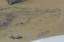 miniatuur 4 - Grand dessin E. Saulais Lionne courant fusain début XIXe suiveur Victor Adam