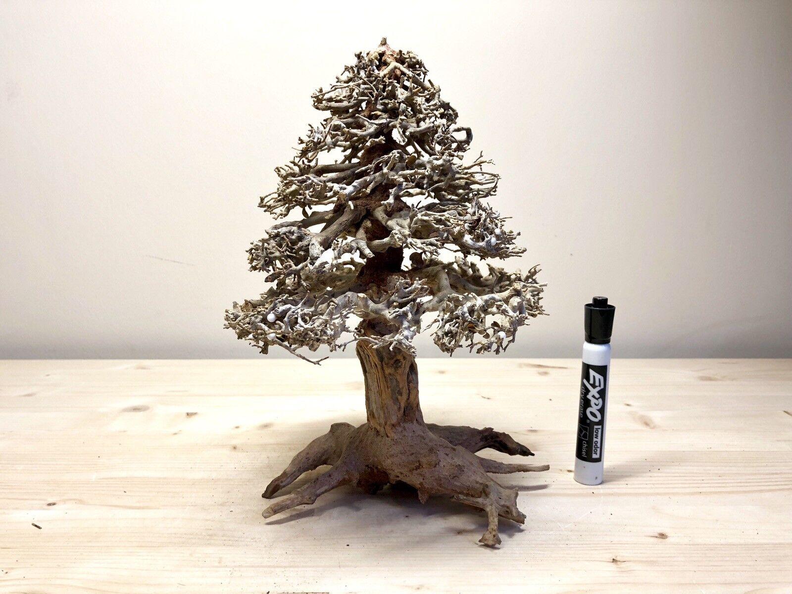 Xmas Bonsai Driftwood Christmas Tree Aquarium Aquascape Aquascape Aquascape Moss Plant Shrimp Tank e4527e