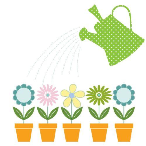 Japanischer Blattsenf Brassica rapa Gemüse 20 Samen MENGENRABATT !!!
