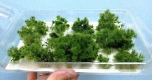 Warhammergreen-Shrubs-2-1-5-8in-About-Green-Evergreen-Plastic-Rail