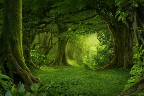 A1Magical Green Forest Poster Art Print 60 x 90cm 180gsm Trees Fun Gift #8294