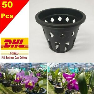 50x 4 Plastic Pot Baskets Orchid Flower Garden Home Plants Outdoor Thai Ebay
