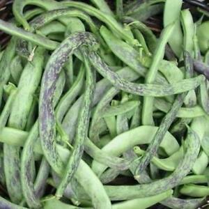 Rattlesnake Snap Bean Seed (Pole Type) - US Seller - Ships Fast!