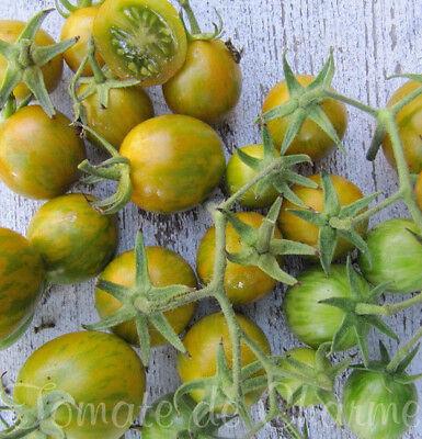 Wilskrachtig 10 Graines De Tomate Rare Green Zebra Cerise Cherry Vegetables Tomato Seeds Bio Snelle Warmteafvoer