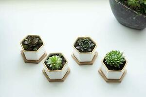 New set of 4 decorative succulent planter ceramic golden trim White cactus pot