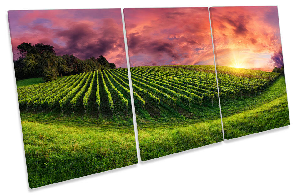 Vineyard Landscape Sunset Picture CANVAS WALL ART TREBLE Print
