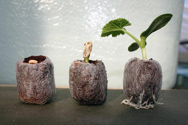 10pcs Jiffy Pellets - 50mm > Seeds Starting Pots > Compressed Coir