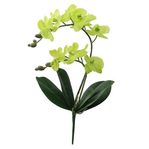Fleurs artificielles REAL TOUCH Latex 2 Branche Orchidée Fleurs avec feuilles mariage