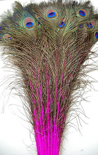 """50 Pcs DYED PEACOCK Tail Feathers 40-45/"""" HOT PINK; Crafts//Art//Bridal//Costume"""