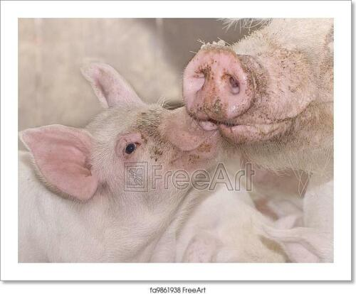 Mother And Baby Pig Art Print Home Decor Wall Art Poster C