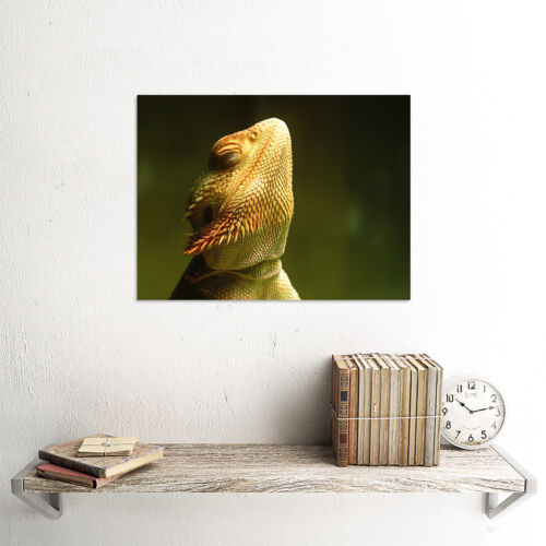 ANIMAL PHOTO BEARDED DRAGON REPTILE 12 X 16 INCH ART PRINT POSTER PICTURE HP2050