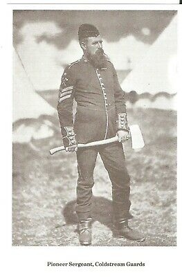 Image result for coldstream guards pioneer sergeant