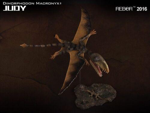REBOR Dinosaur Collectables Dimorphodon Macronyx Judy 1:6 Scale
