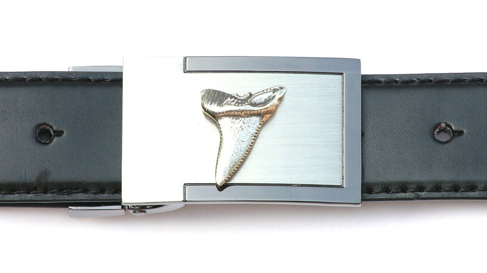 Shark Tooth Belt Buckle and Leather Belt in Gift Tin Ideal Wildlife Gift 320