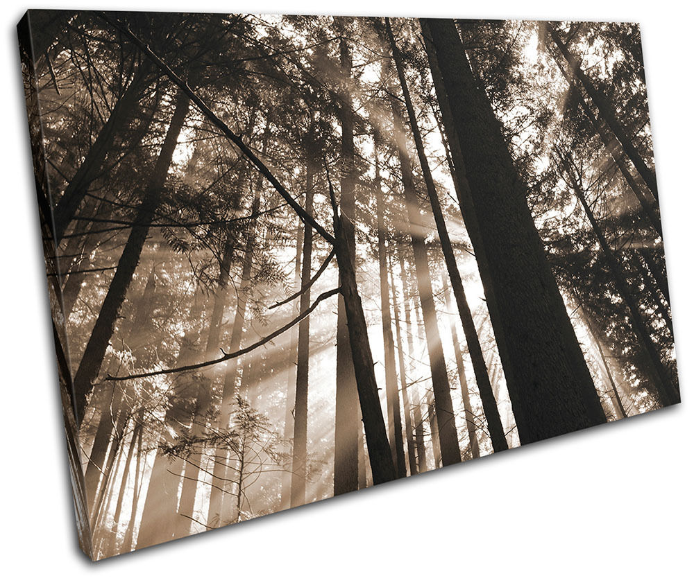 Forest Landscapes SINGLE TELA parete arte foto foto foto stampa 614247