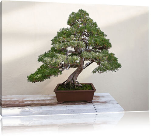 Bonsai Baum Leinwandbild Wanddeko Kunstdruck