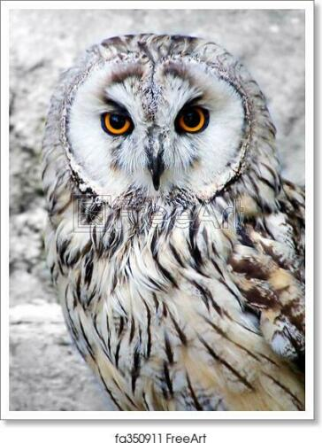 Wall Art Home Decor Owl Art Print // Canvas Print C Poster