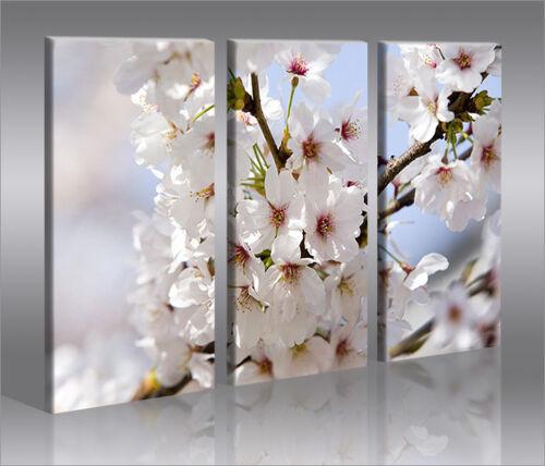 Blossom 3 Bilder Sommer Blüten Naturbilder auf Leinwand Wandbild Poster