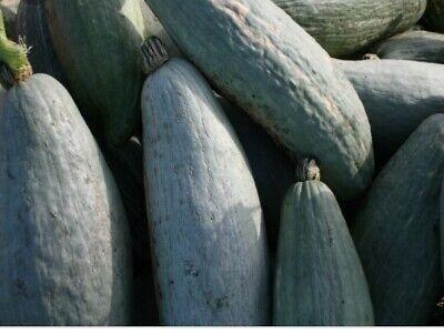 NON-GMO FREE SHIPPING! 15 GOLDEN HUBBARD SQUASH SEEDS 2021